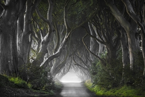 Bild på DARK HEDGES