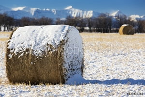 Bild på Close up of snow covered hay bale in a snow covered stubble field with snow covered mountains in the background and blue sky; Longview, Alberta, Canada