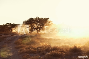Bild på Dusty arid plain and dirt track at sunset, Namibia, Africa