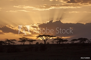 Bild på African sunset with acacia and bird