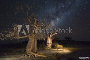 Bild på Baobab trees and the milkyway