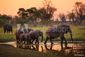 Bild på Elephants in Moremi Game Reserve - Botswana