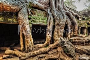 Bild på Ancient ruins and tree roots, Ta Prohm temple, Angkor, Cambodia