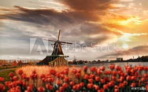 Bild på  Dutch windmills with red tulips close the Amsterdam, Holland