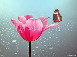 Bild på Beautiful tulip with butterfly