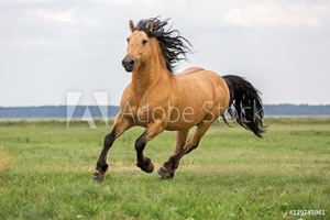 Bild på Bay horse running on a meadow.