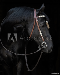 Bild på Black horse in the bridle on black background