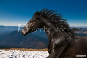 Bild på Black Horse portrait runs on the mountains and blue sky background