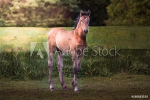 Bild på Foal in a forest during sunrise