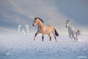 Bild på Buckskin stallion and white stallion run on snow in winter