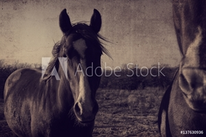 Bild på Antique horse portrait fram background.  Great for graphics or print.