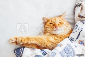 Bild på Cute ginger cat lying in bed under a blanket. Fluffy pet comfortably settled to sleep. Cozy home background with funny pet. Flat lay. Top view, place for text.