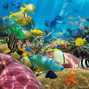 Bild på Man underwater coral reef and tropical fish