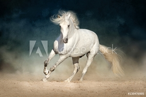 Bild på White horse run forward in dust on dark background