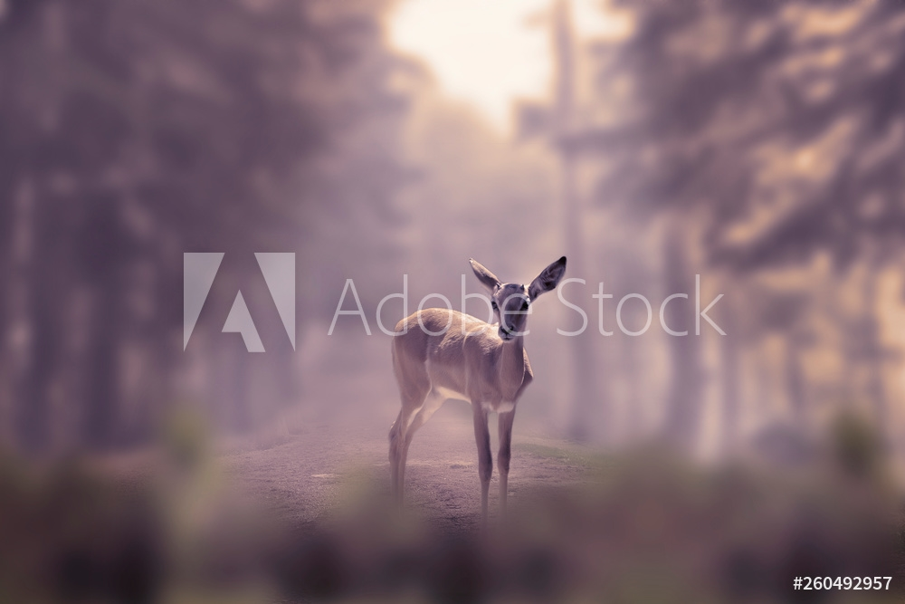 Bild på Alone small deer cub in the fog of a winter forest mountain. Nature and wildlife concept with empty copy space for Editor's text.